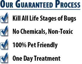 Chandler Bed Bug Heat Treatment Experts