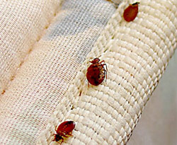 Chandler Bed Bug Treatment